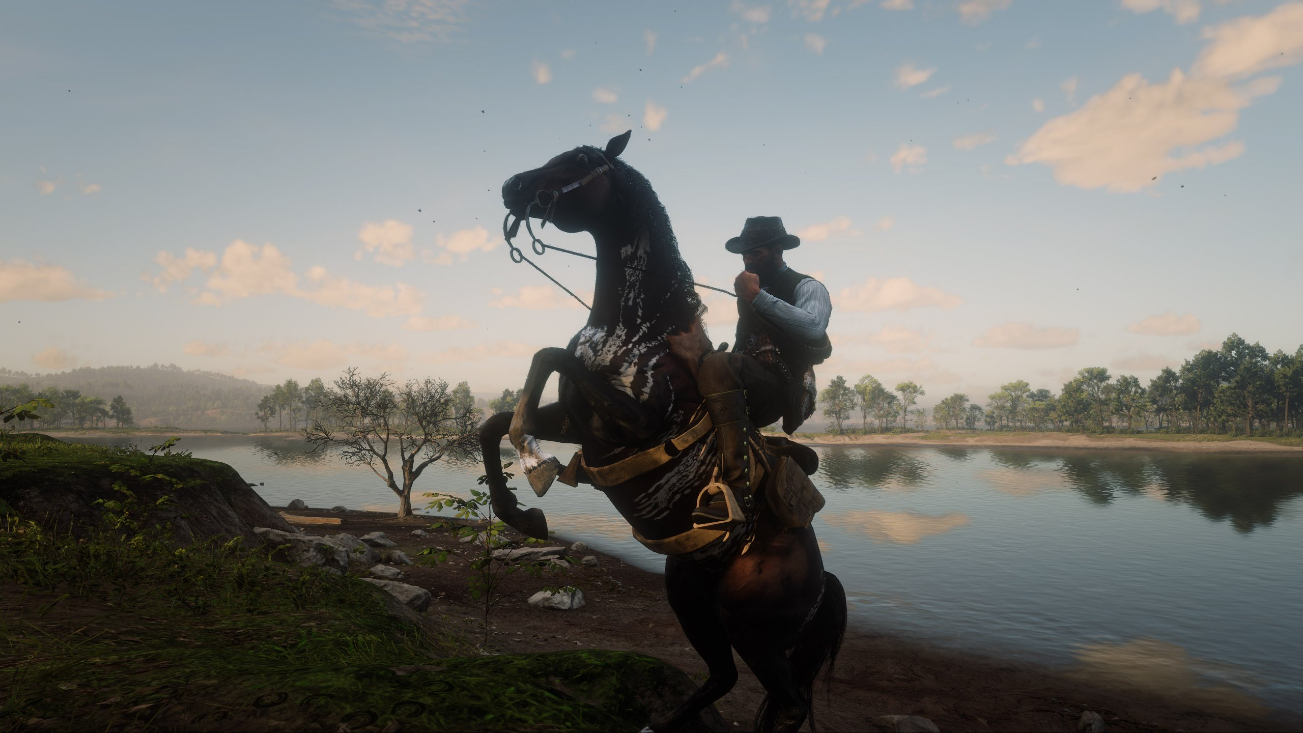 Warped Brindle Arabian Horse Location In Red Dead Redemption 2 Shacknews