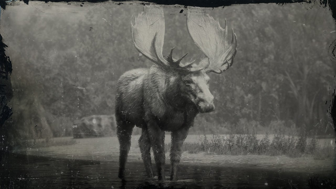 Moose Locations Red Dead Redemption 2