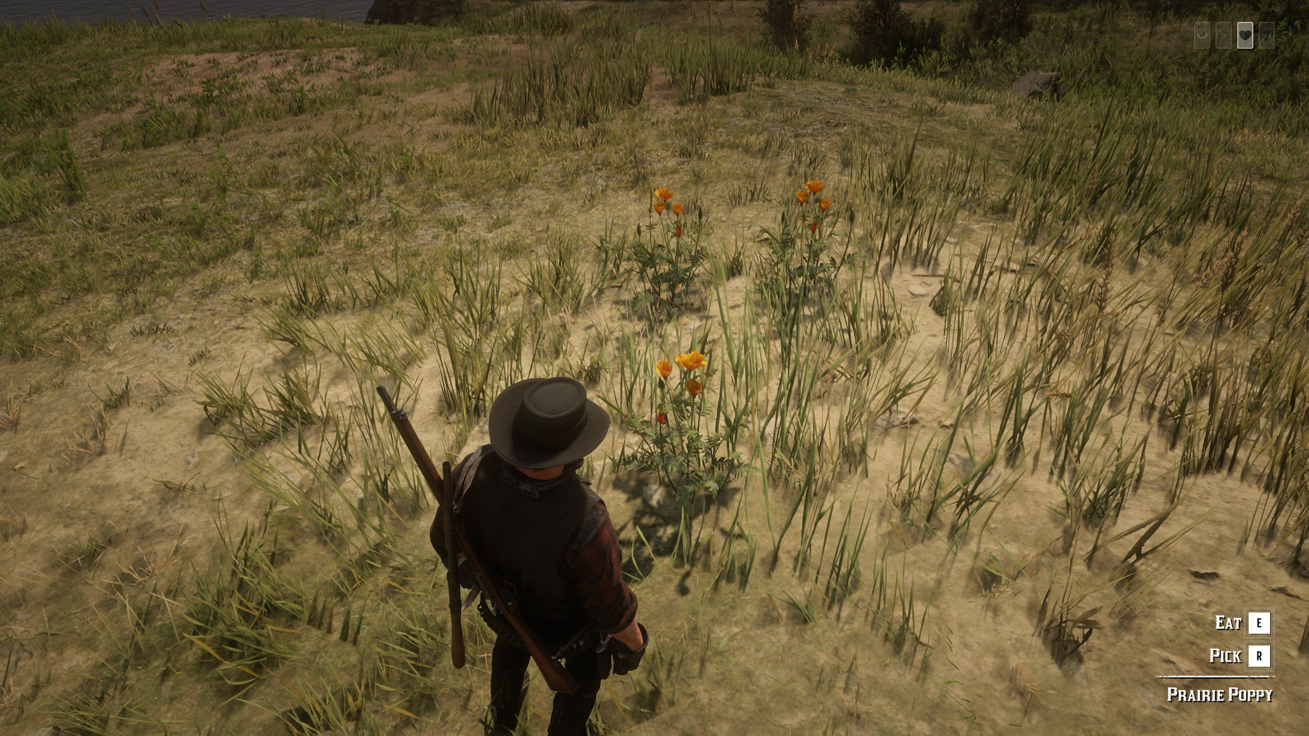 Prairie Poppy in Red Dead Redemption 2
