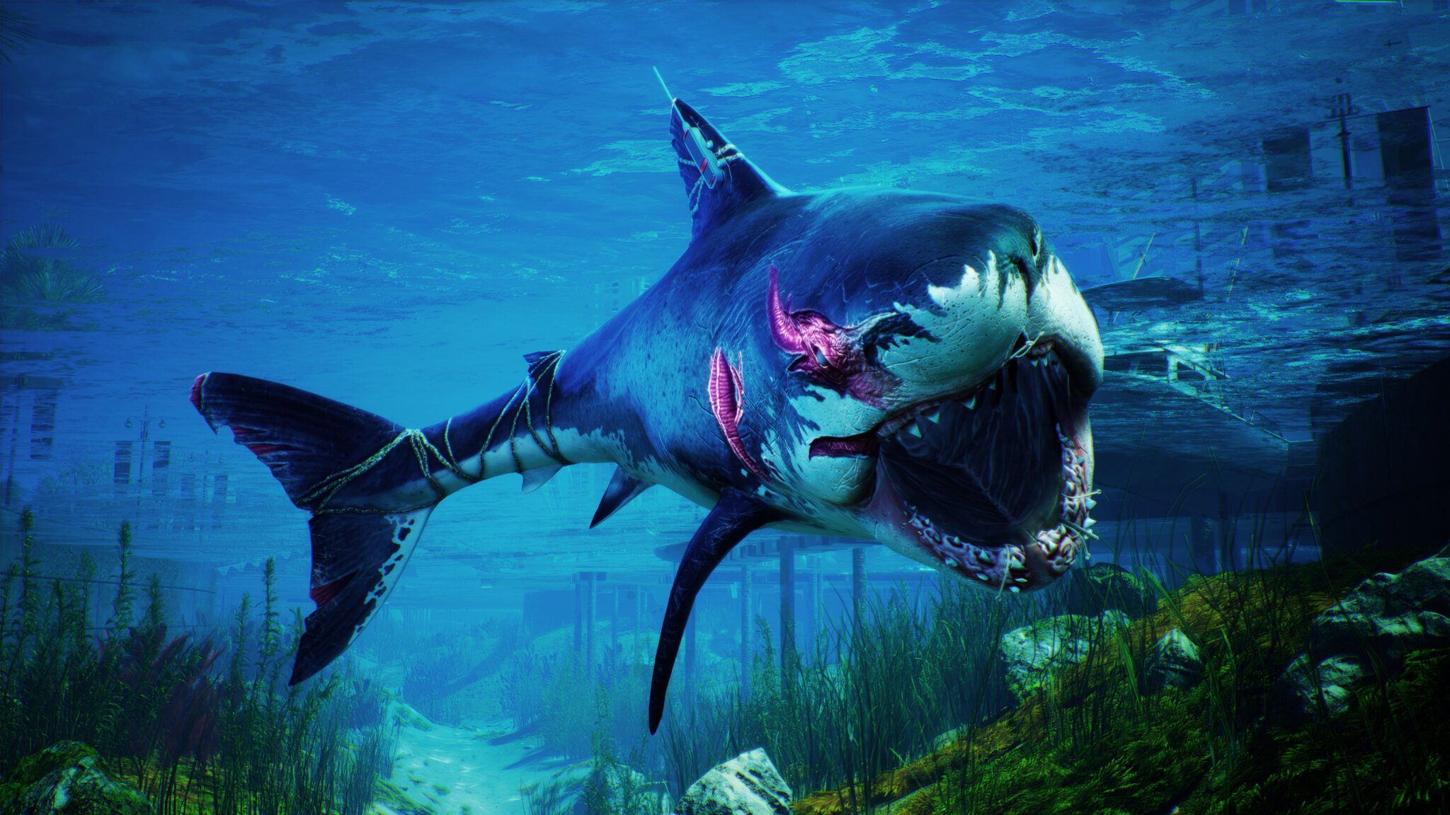 Watch out, boy or this shark will chew you up in Maneater
