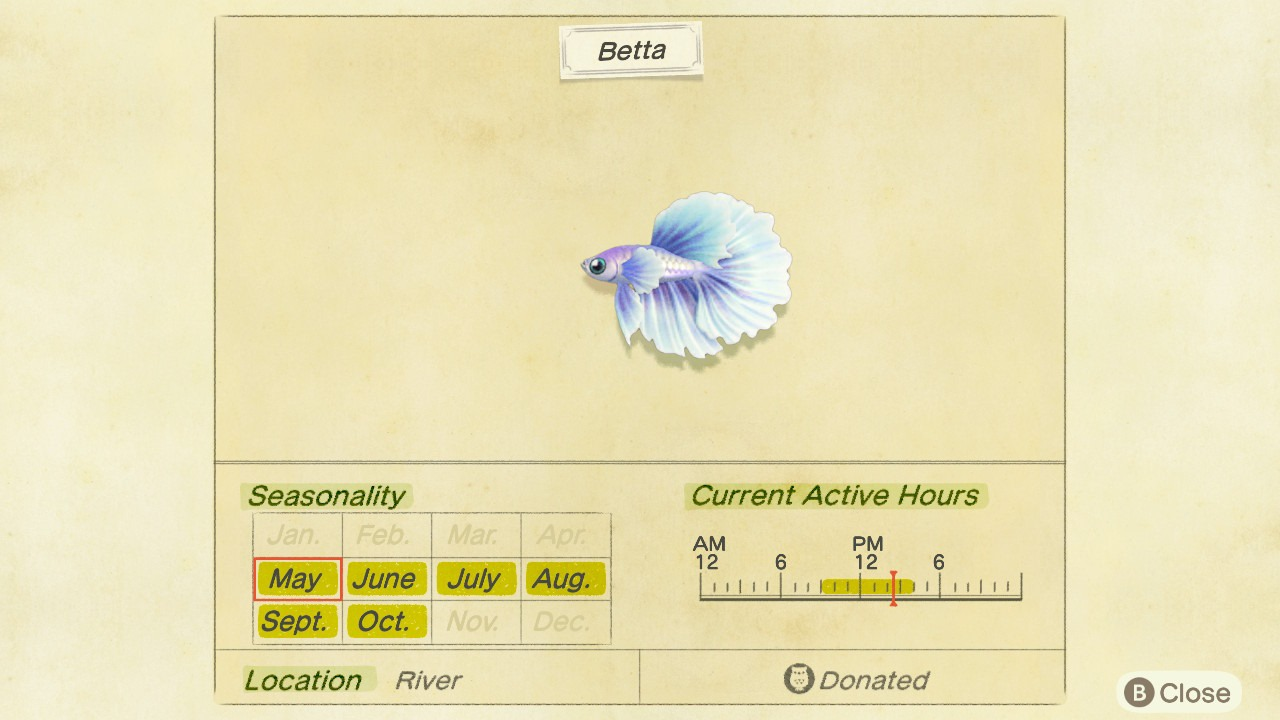 Betta fish in Animal Crossing: New Horizons