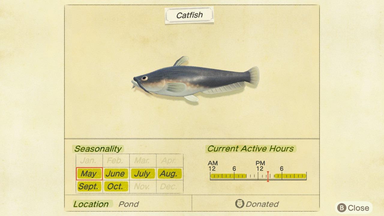Catfish Critterpedia entry - Animal Crossing: New Horizons