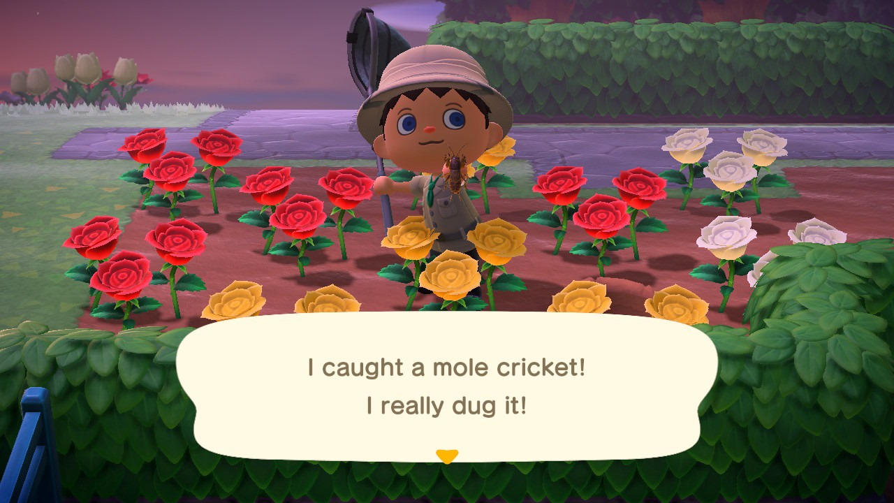 catching a mole cricket - animal crossing: new horizons