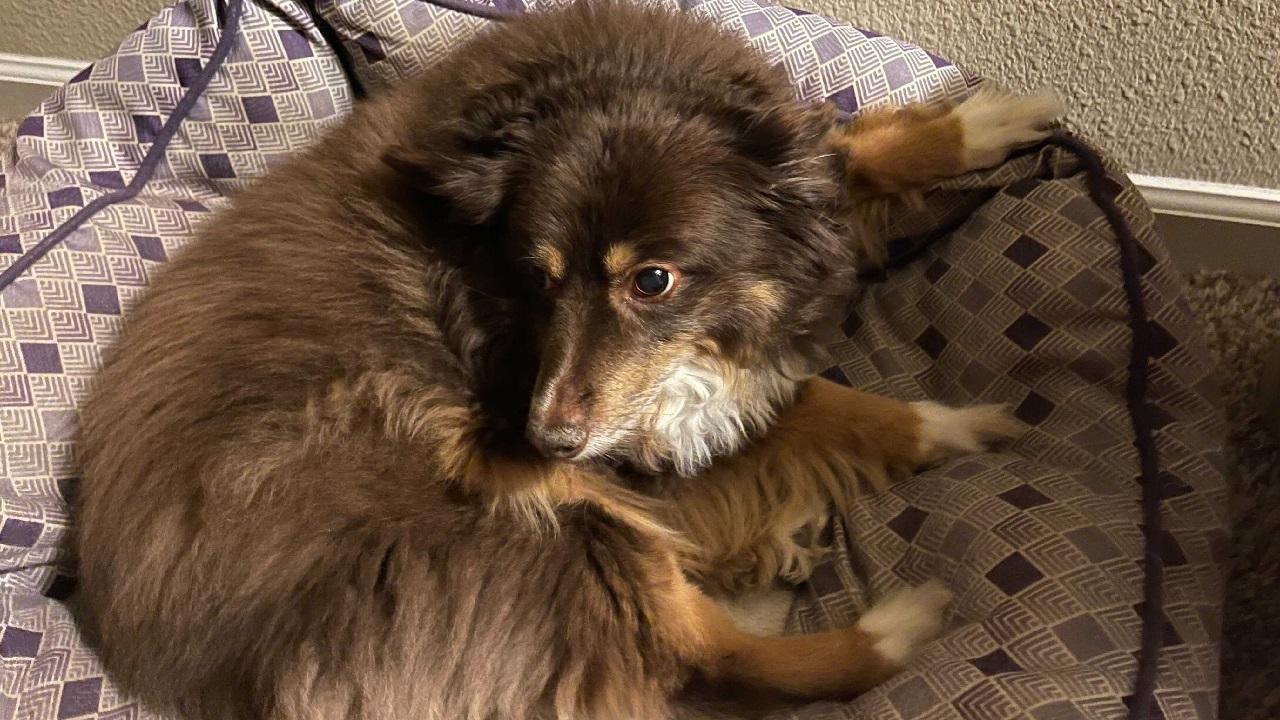 Flaff is a very good doggo.